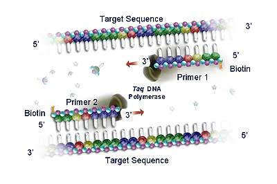 Research paper on pcr